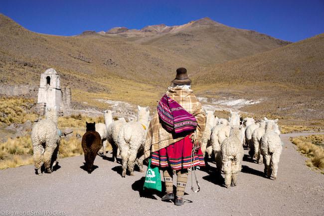Peru, Alpacas, Lady