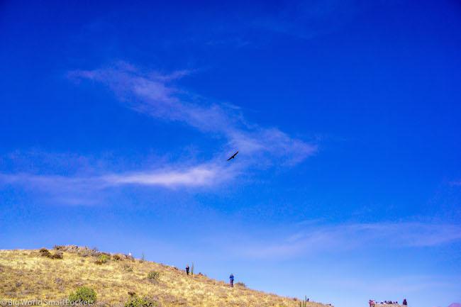 Peru, Colca Canyon, Condor