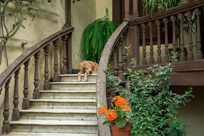 Peru, Lima, Dog