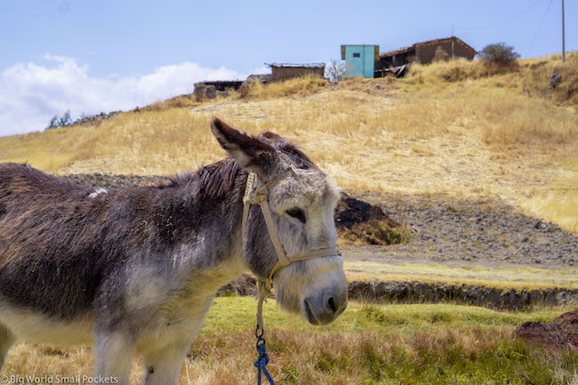 Peru, Wilcococha, Donkey