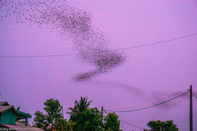 Cambodia, Battambang, Bat Swirl