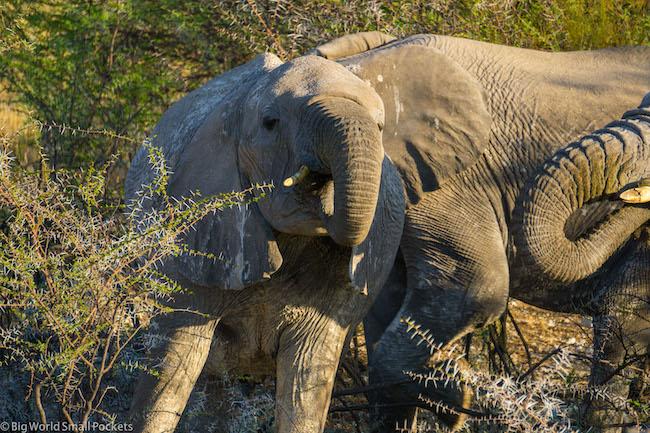 Namibia, Etosha National Park, Elephant