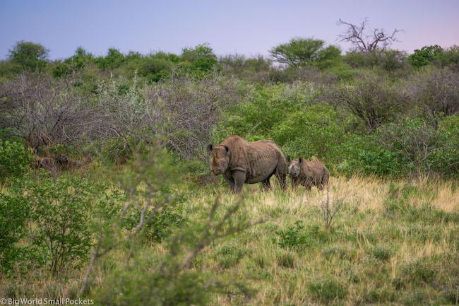 Namibia, Etosha, Rhino & Baby