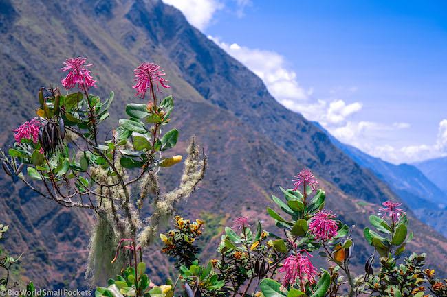 Peru, Choquequirao, Flowers