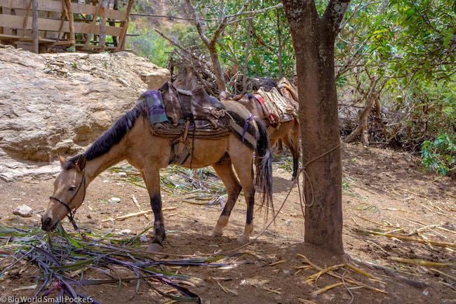 Peru, Choquequirao, Mule