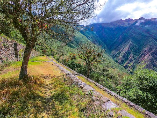 Peru, Choquequirao, Tree