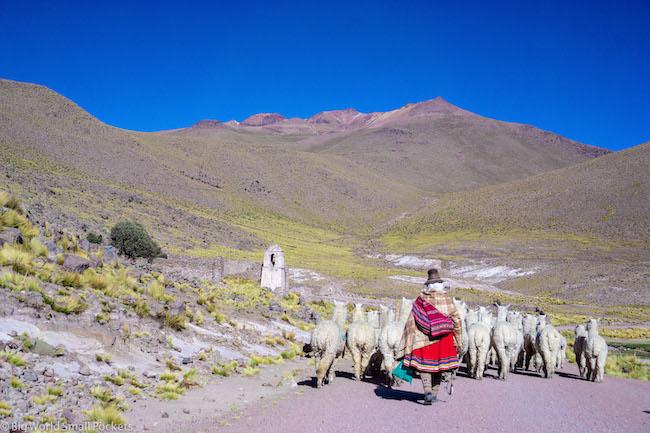 Peru, Colca Canyon, Alpaca Herder