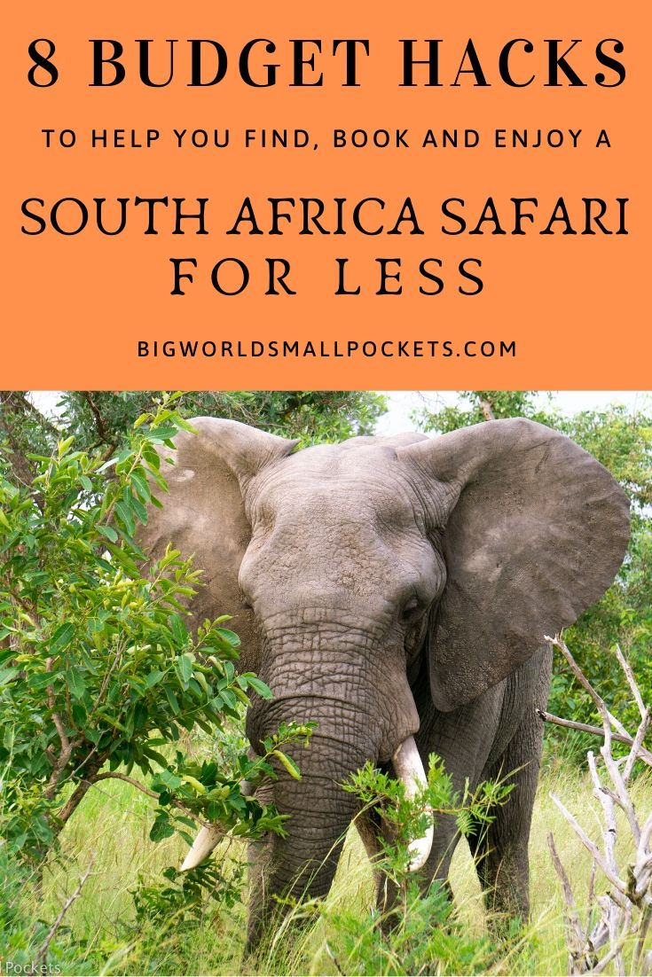 8 Budget Hacks for South Africa Safari