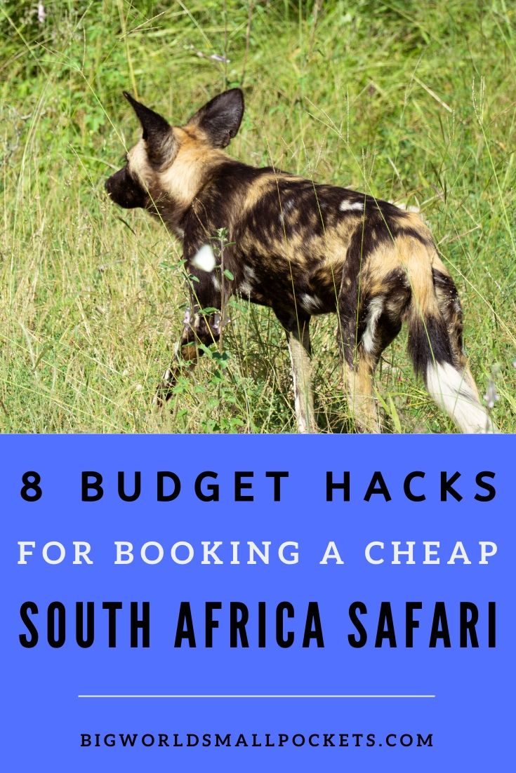 8 Budget Hacks to Pay Less for Your South African Safari