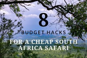How To Book a Cheap South Africa Safari : 8 Budget Hacks