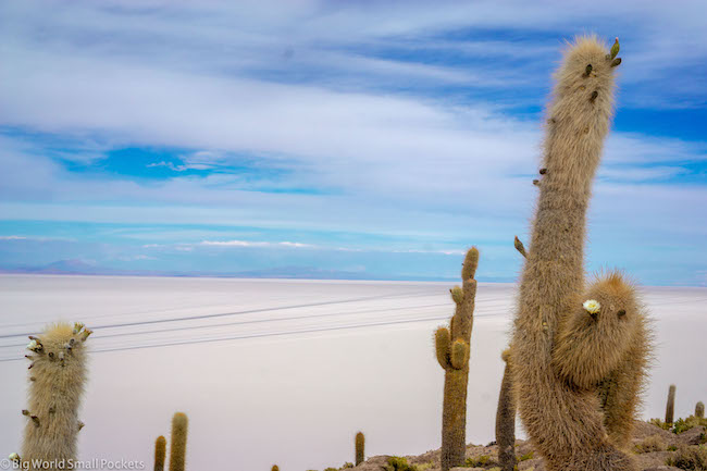 Bolivia, Uyuni, Cactus Island