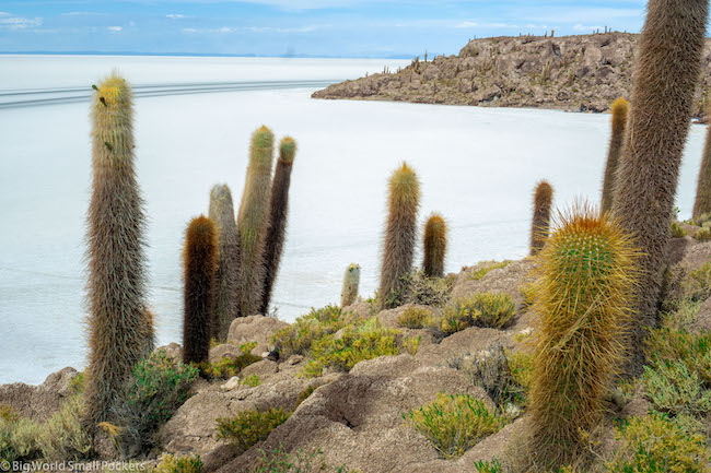 Bolivia, Uyuni Tour, Cactus
