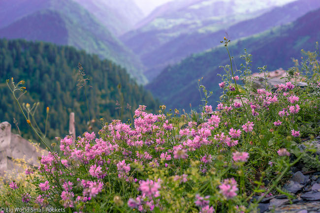 Georgia, Omalo, Flowers