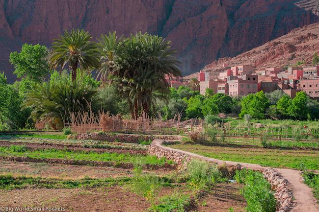 Morocco, Ait Baha, Date Palms