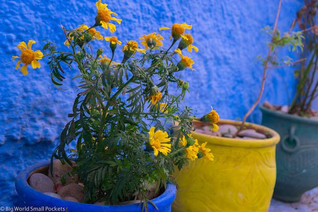 Morocco, Chefchaouen, Plants