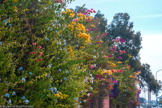 Morocco, City, Bougainvillea