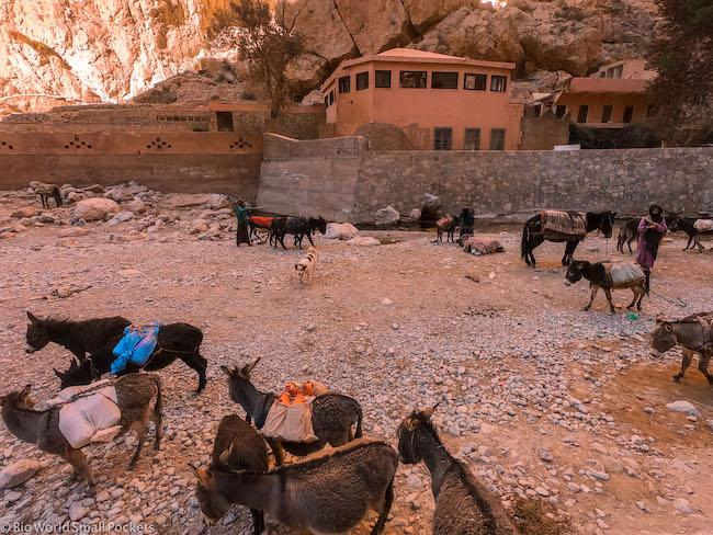 Morocco, Todra Gorge, Donkeys