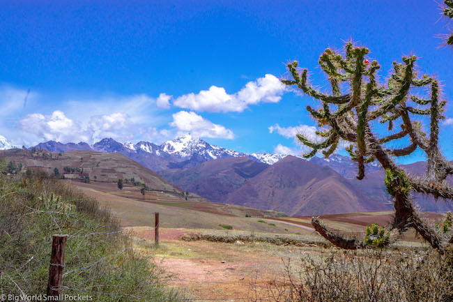 Peru, Sacred Valley, Cactus