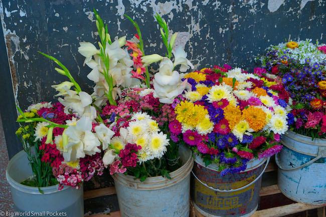 Argentina, Salta, Flowers