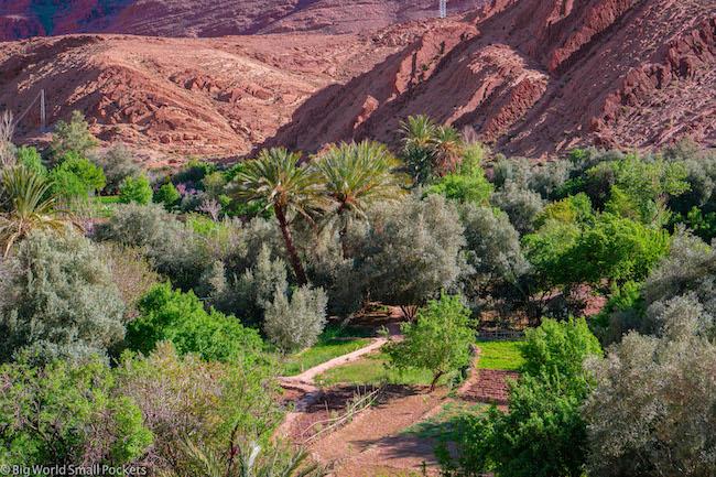 Morocco, Desert, Date Palms