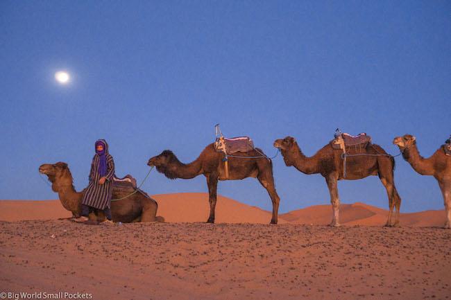 Morocco, Sahara Desert, Camels Under Moon