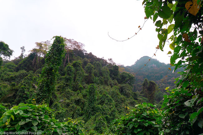 Vietnam, Phong Nha, Jungle