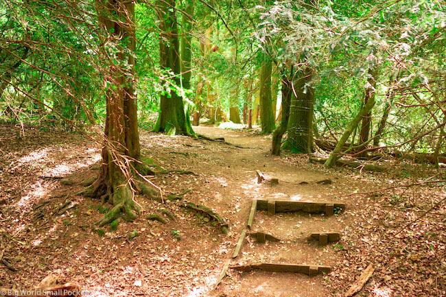 England, Surrey, Box Hill Walks