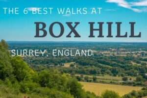 Box Hill Walks: The Best 6