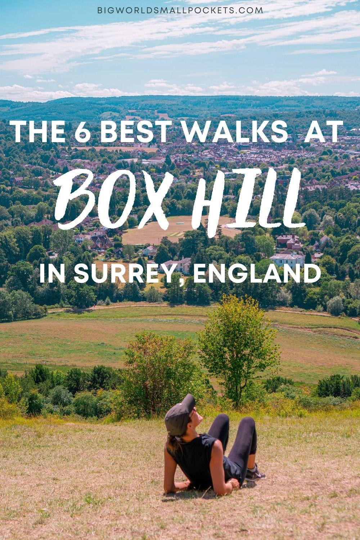The 6 Best Walks Around Box Hill in Surrey, England
