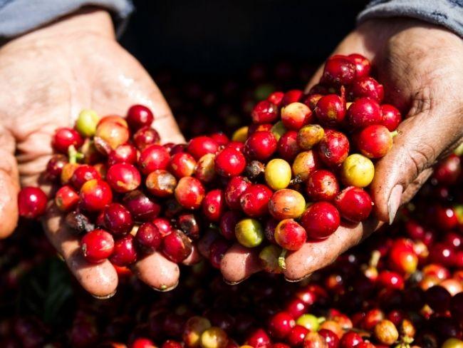 Costa Rica, Coffee, Beans