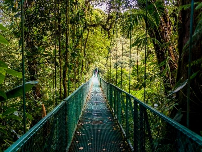 Costa Rica, Rainforest, Bridge