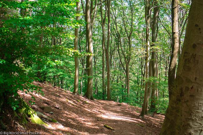 Germany, Heidelberg, Forest