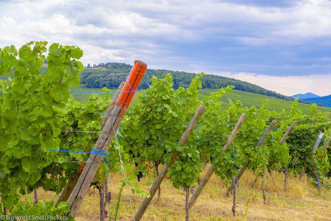 France, Alsace, Vineyard & Grapes
