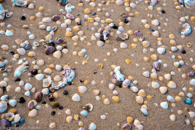 England, Essex, Shells