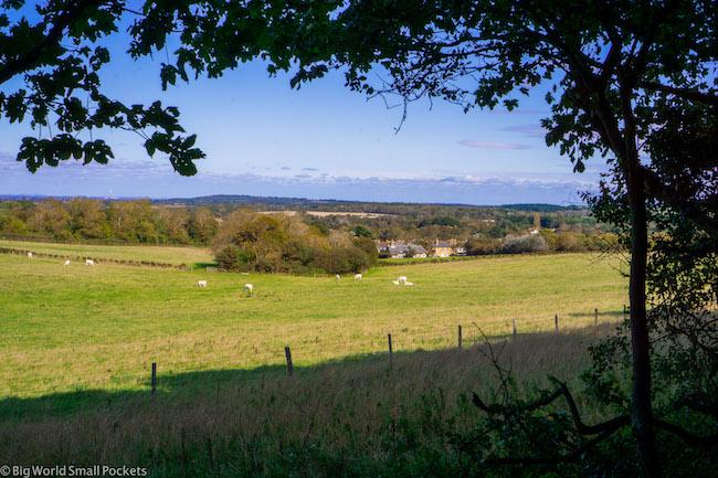 England, Isle of Wight, Field