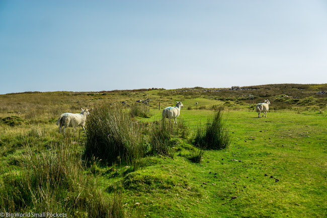 Wales, Brecon Beacons, Sheep Crew