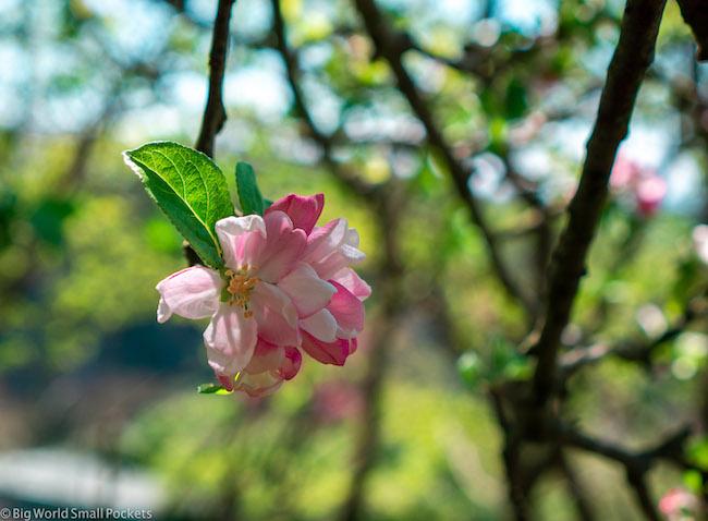 UK, Somerset, Flower