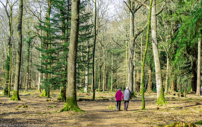 England, New Forest, Couple Walking