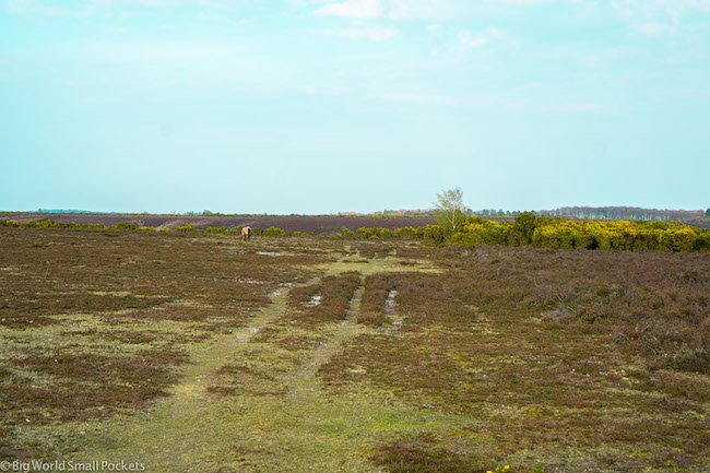 England, New Forest, Moor
