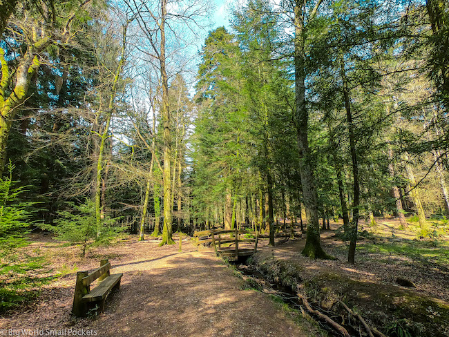 England, New Forest, Walk