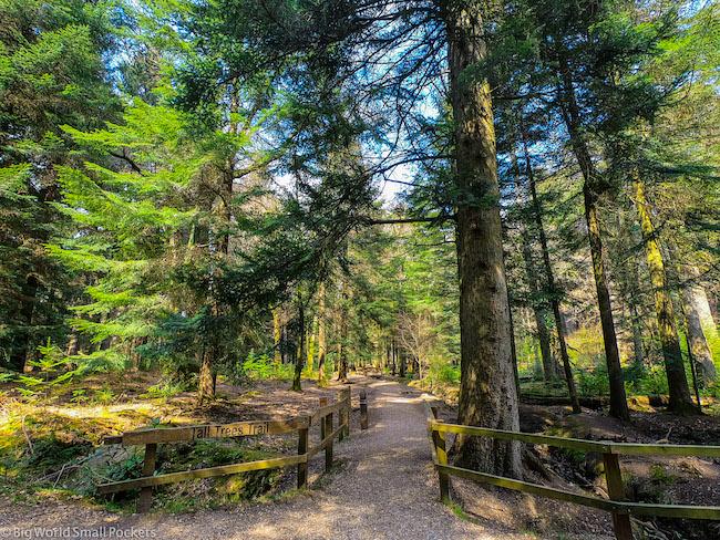 England, New Forest, Walks