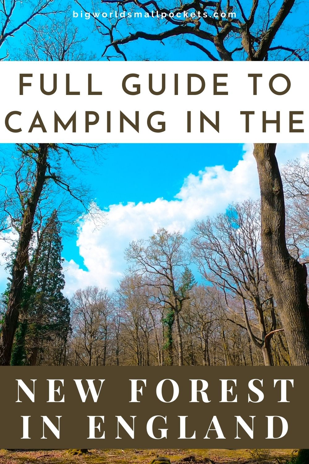 Full Guide to Camping in England's New Forest National Park