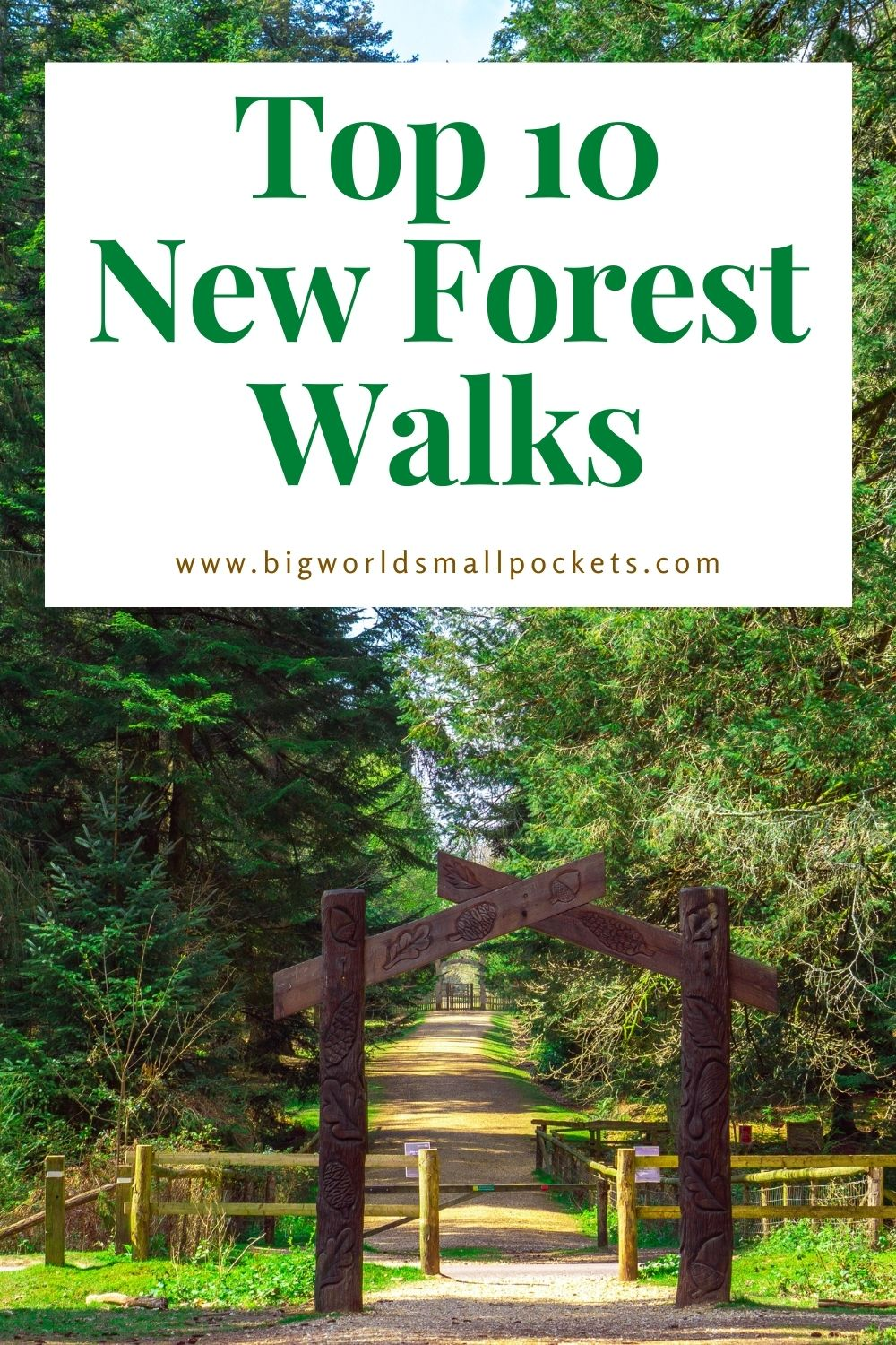 The 10 Best Walks in the New Forest, England