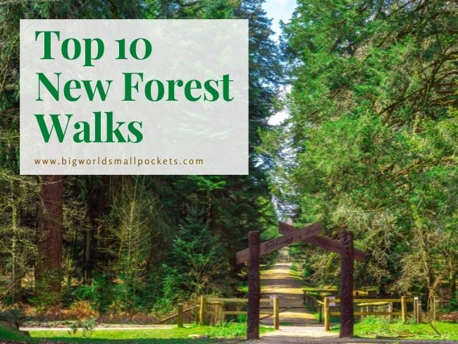 Top 10 New Forest Walks