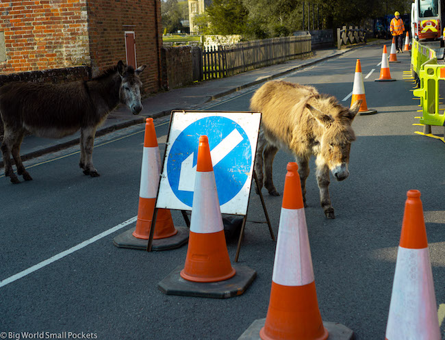 UK, New Forest, Donkey Traffic Jam