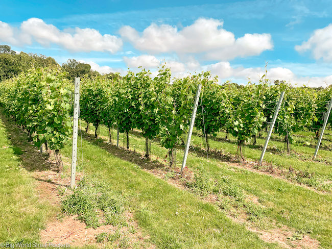 UK, Canterbury, Winery